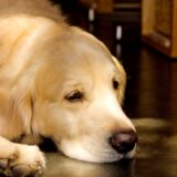 犬に白いふけやかさぶたが… 皮膚病かも?