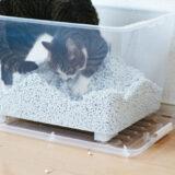 猫のお尻からくさい液が・・・病気ではなく