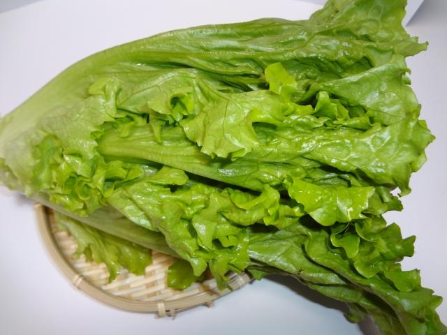 レタスって栄養はない?